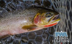 Fly-Fishing with FWA