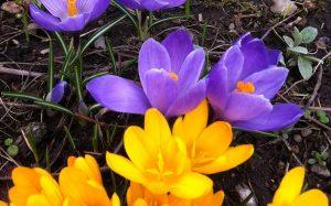 SpringSprungFernie
